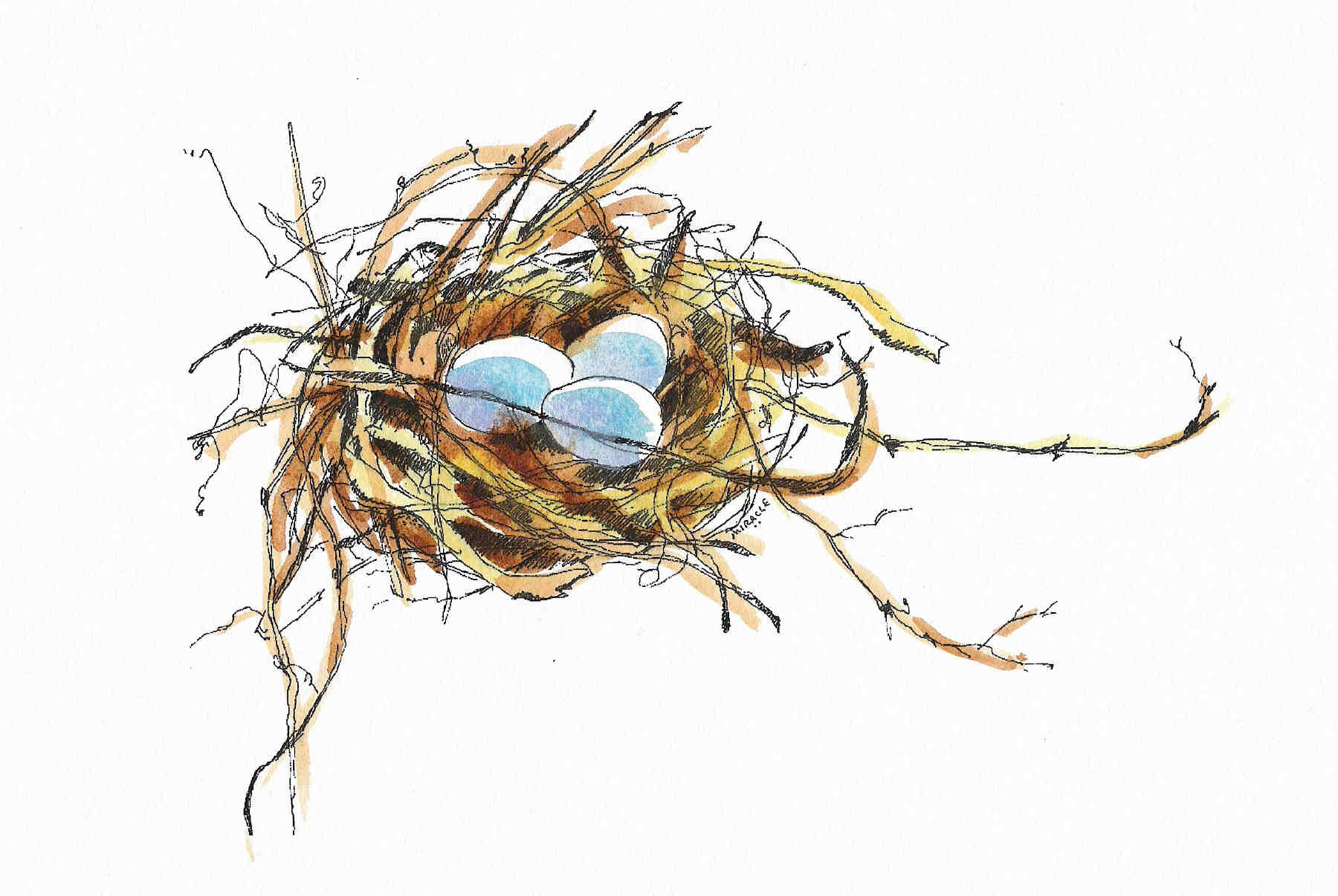 It's just a graphic of Inventive Bird In Nest Drawing