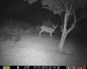 Big buck 10:15 p.m.