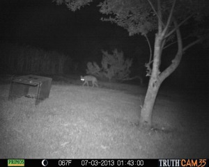 Wylie Coyote 1:43 a.m.