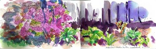 Azaleas and Hostas by the Woodshed