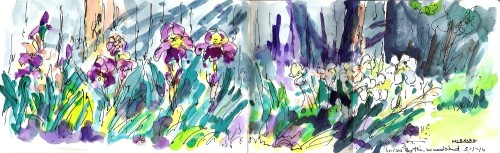 Irises by the Woodshed