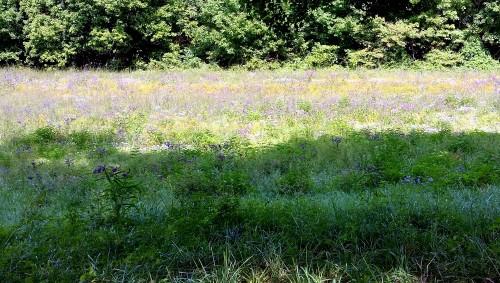 Monet's Fields, original photograph