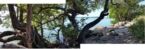 Among the mangroves, Florida Keys 2017