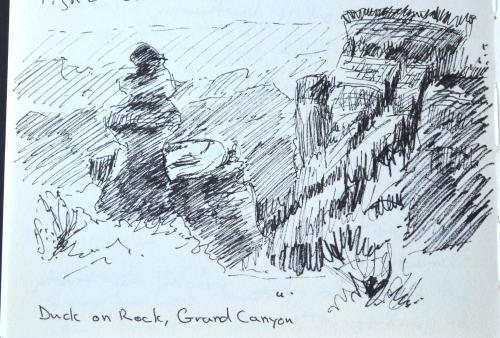 Duck on Rock, Grand Canyon, sketch, Kit Miracle